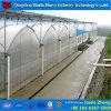 로즈 증가를 위한 저가 명확하게 농업 플레스틱 필름 온실