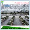 농업 사용을%s 중국 상업적인 유리제 온실