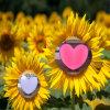 Rosa Tipo coração Display LED