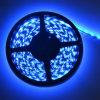 Tira azul de DC12V/de 24V SMD5050 LED (60LEDs/M)