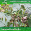 Extrait pur d'Andrographis Paniculata (5% Andrographolide)
