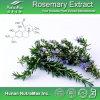 Естественная кислота выдержки 5%~60% Carnosic Розмари