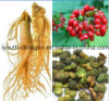 Ginseng, Top 100% Natural Ginseng Active Semillas Té, Anticancer, Prevención y Tratamiento Riñón, Eliminación de Radicales Libres, Prolong Life, Alimentos Saludables