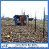 Горяч-Окунутый гальванизированный стальной столб загородки металла t для загородки поля