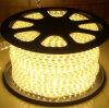 3000K/6000K/4000K/Rouge/Vert/Bleu 5050SMD LED RVB RVB Corde Lampe à LED Strip Light