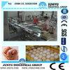 Clasificación de huevos de buena calidad Línea de Procesamiento (AZ-07)