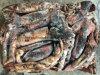 بيع بالجملة يجمّد فواكه البحر أسود الحبّار