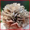 Améliorer l'extrait de Grifola Frondosa d'immunité, poudre d'extrait de champignon de couche de Maitake