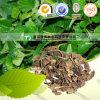 Medicina natural pura de ervas Houttuynia Cordata Yu Xing Cao