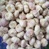 Grande aglio fresco di formato di bianco cinese