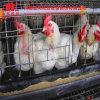 가금 농장을%s 유형 자동적인 보일러 닭 감금소