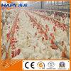 Equipamento de exploração agrícola do reprodutor das aves domésticas para a produção do reprodutor da grelha