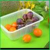 Vácuo da caixa da fruta de PVC/Pet/PS que dá forma à máquina