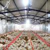 Broiler Farmのための自動Poultry Equipment