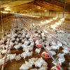 Câbles d'alimentation et buveurs automatiques de matériel de volaille pour la Chambre de poulet