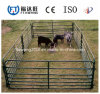 高品質の中国の牛塀または馬の塀または金網の塀