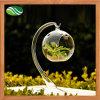 Стеклянный Terrarium завода воздуха вазы стеклянный для декора