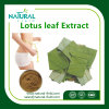 100% natürliches getrocknetes Lotos-Blatt-Auszug-Puder 2% Nuciferine