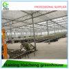 Handelsgewächshaus-Prüftisch für Polycarbonat-Gewächshaus