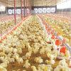 Strumentazione del pollame dell'insieme completo per produzione della griglia