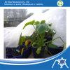 Tissu non-tissé de pp pour la couverture résistante UV de récolte