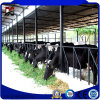 Vertente fabricada do gado da vertente da vaca dos edifícios da construção de aço