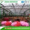 Agricultura/Comercial estufa de vidro para plantio/Flores/Eco Hotels.