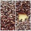 Сладостный сырцовый гречиха (сторновка) (JD07)