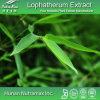 Выдержка 100% естественная Lophatherum (8-24% флавонов)