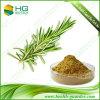1%-10% polvere solubile in acqua Rosemary P.E, acido di Rosemarinic