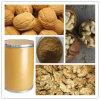 Extrato de Nogueira Natural Walnut extracto de carne Walnut Extracto do Kernel