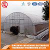 De enige Serre van de Tunnel van de Plastic Film van de Spanwijdte voor Verkoop