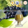 Extrait de peau de raisin rouge Resveratrol pigments de peau de raisin