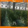 Agribusiness를 위한 높은 Output 다중 Span Glass Greenhouse