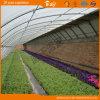 Hot Sale Solar Green House pour de plus en plus de fraises