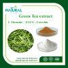 Reines natürliches grüner Tee-Auszug-Puder EGCG 98%