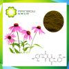 Extrait d'échinacée--polyphénol, Cichoric Chicoric acide, acide, Echinacea purpurea