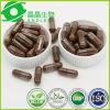 De alta calidad de suplemento herbario anti tumoral Lingzhi Reishi Polvo Cápsula