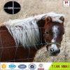 Австралия исправила загородка скотоводческого хозяйства загородки поля суставного сочленения