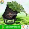 Bac en plastique d'usine de noir d'utilisation de jardin de 3 gallons pour la pomme de terre