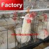 Qualitäts-Huhn-Rahmen-Zeile für Geflügelfarm
