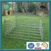 Оцинкованный металл животноводческой фермы пролётами для лошади (ху-L67)