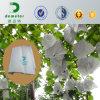 フルーツのカラーを改善するチリでベストセラー表ブドウのための紫外線抵抗力があるプラント養樹園袋