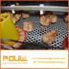 Fabricante China Pullet galvanizado de la jaula de pollo