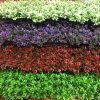 Künstlicher vertikaler Garten für Landschaftsdekoration