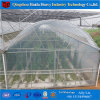Tomato Greenhouse Agricultural Greenhouse with Hydroponic Systems