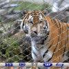 Ss L304/316Cable Metálico de malla del Zoo de tigre Alojamiento