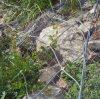 Het gegalvaniseerde Opleveren van de Bescherming van Teeco van de Deklaag van pvc
