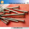Beste Qualitätsdraht-Stahl-Nägel