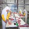 Stanza personalizzata di conservazione frigorifera per porco e manzo